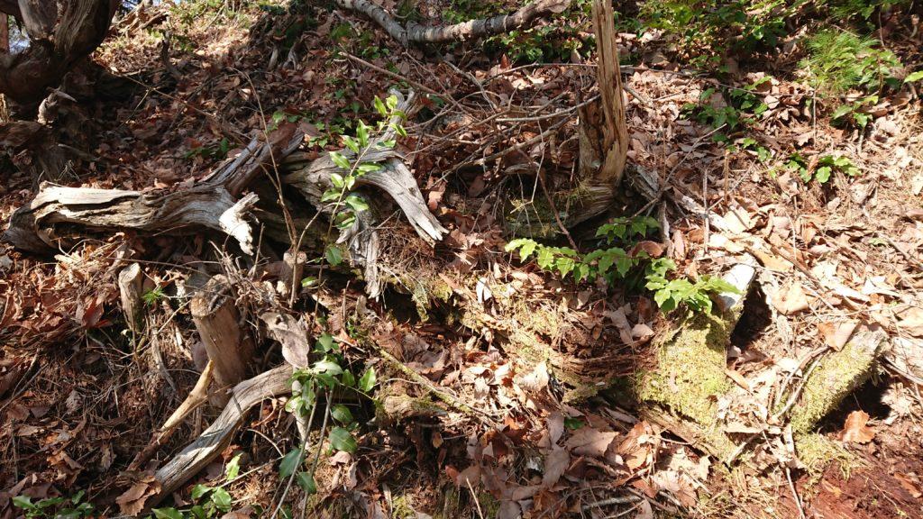埋もれた枝